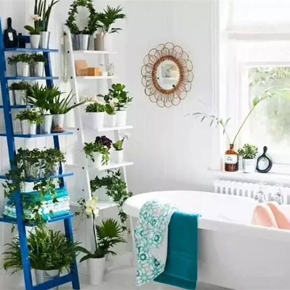 浴室镜子风水禁忌有哪些?卫生间放置什么植物来增加阳气?